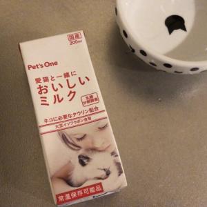 【初体験】猫用ミルクを飲む猫はこちらです...