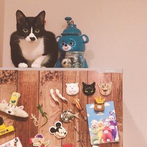 【うちの猫】最近撮った可愛い瞬間をご紹介します...