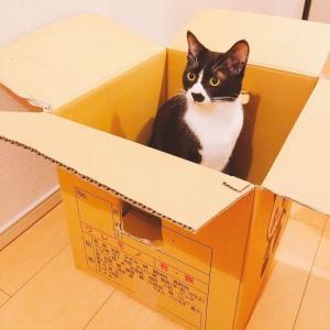 【かわいい】箱に入る猫はこちらです...