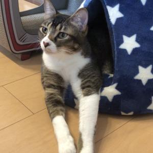 【三角テント】サイズ感が合ってない猫はこちらです...笑