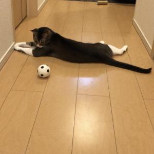 【しょぼん】ボールに全く興味を抱かない猫はこちらです...