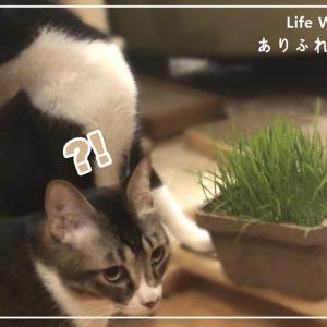 【初体験】うちの猫に猫草を与えるとこうなります...
