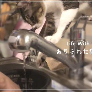 【まさか!?】料理のお手伝いをしてくれる猫?はこちらです...