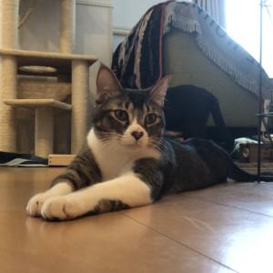 【癒し】「びよ~ん」する猫はこちらです...