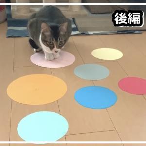 【猫の習性】猫ホイホイ?猫転送装置?我が家の猫で試してみた...後編