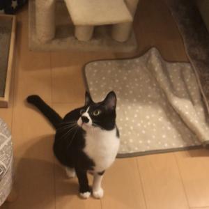 「右⇒左⇒右⇒ジャンプ」+「右⇒左⇒右⇒左」な猫はこちらです...w