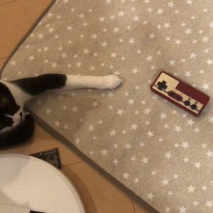【夏休みチャレンジ  DAY1】Aボタンを押すと○○が貰える猫はこちらです...