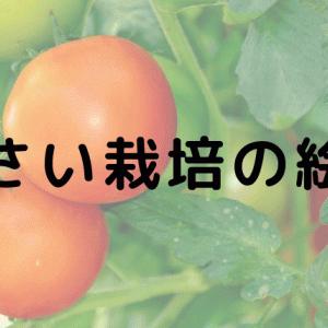 【野菜が好きになる】野菜の栽培がテーマの絵本9選!食育本としてもおすすめ