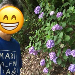 高良山をワラーチでロング走。紫陽花、満開!