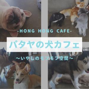 ドリンク付き150฿で楽しめる犬カフェ【Hong Hong Cafe】パタヤ