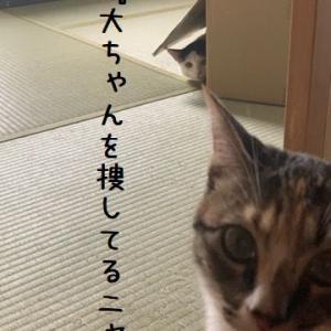 かくれんぼ?