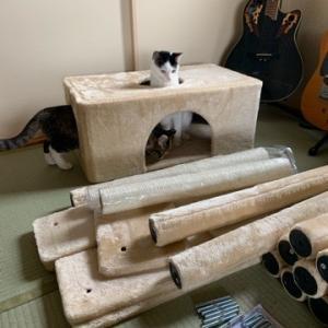 大きな猫タワーを買いました
