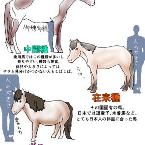 ラオウの黒王号の種類 〜馬の種類〜