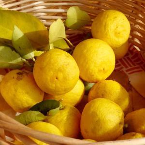 *ユズが黄色くなって葉っぱも黄色