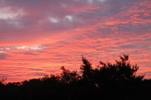 夕焼け雲が綺麗ですねぇ