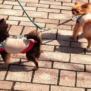 犬の散歩を任せたい 散歩代行にかかる料金はどのくらい?