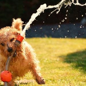犬の熱中症の予防と対処法・便利な対策グッズお勧め6点