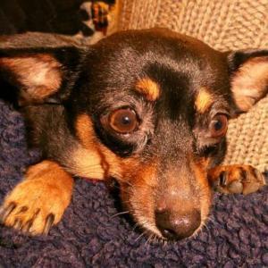 犬のてんかんの症状 危険な発作の2パターンと対処法