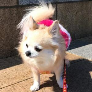 【パテラ】犬の膝蓋骨脱臼の手術とグレード・術後経過の体験談