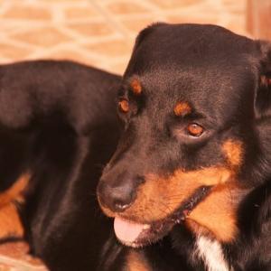 犬の椎間板ヘルニアの初期症状とグレード分類による進行レベル