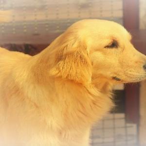 犬のしつけ教室と預かり訓練 その違いと選び方について