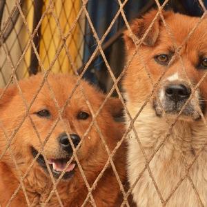 殺処分の現状と保健所の引き取りの理由 飼育放棄される犬達