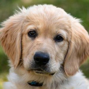 子犬を叩くしつけ方法が及ぼす悪影響  体罰は不適切な虐待