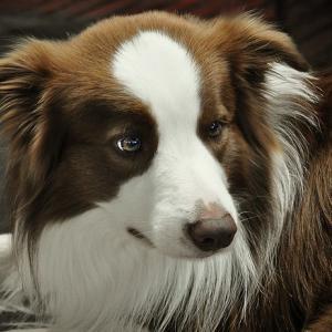 「吐く」「食欲不振」の原因は何?犬の病気を症状から考える