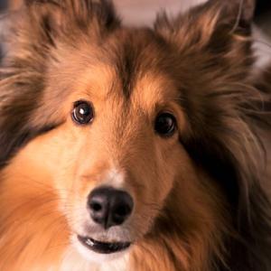 【胆泥症・粘液嚢腫】犬の胆嚢の病気と摘出手術の費用の目安