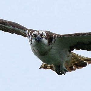 野鳥と目が合う山王山(三王山)