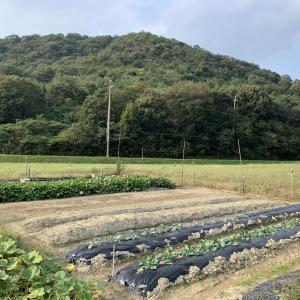 2021年09月23日 芽キャベツ、ブロッコリー農薬散布