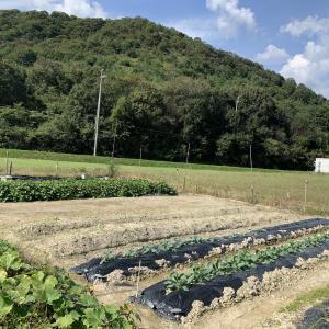 2021年09月25日 畝作り1