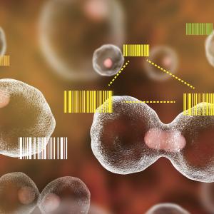 すべての細胞でバーコードとプロファイリング ―進化する「細胞家系図」作成法―