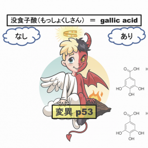 腸内細菌が作る没食子酸は変異p53に作用し大腸がん発生を促進する