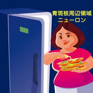 ダイエットの大敵 『ヘドニック・ハンガー(快楽飢餓)』に関わる脳のしくみ