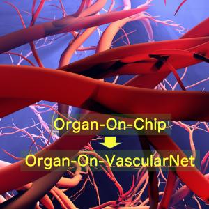 自己組織化でき多用途な血管ネットワーク作成法