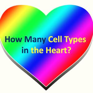 ヒト心臓は何種類の細胞からできている?