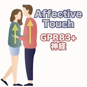 アフェクティブ・タッチ(情動的触覚刺激)を脳に伝える脊髄のGPR83神経