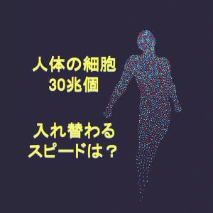 ヒトの体の細胞数は30兆 そのうち毎日入れ替わる数は?