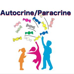インスリンのパラクライン/オートクライン作用を調節する分子インセプター