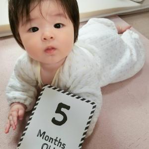 うちのお嬢の成長日記〜5ヶ月になりました〜