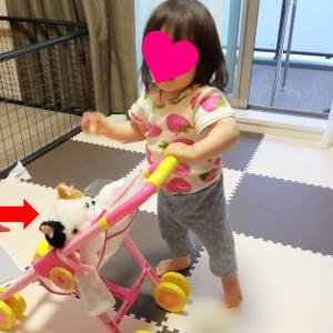 お嬢の成長日記~二足歩行をマスター!~
