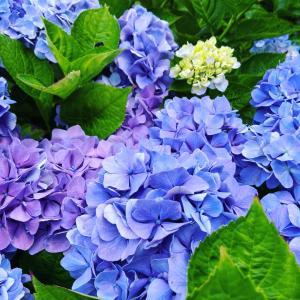 8月になりました!そして、美しい花たち