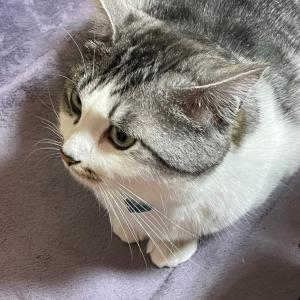 猫は眠くなると耳が温かくなる?