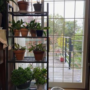 寒さに弱い植物の冬支度