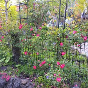 帰って来たら庭は春爛漫