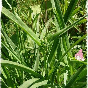 ムーさんと雑草を楽しむ~雑草パワー~