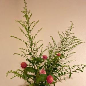 7月に飾っていたお花