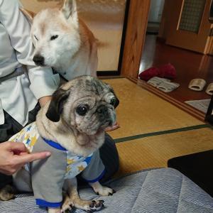 愛犬の介護を考える