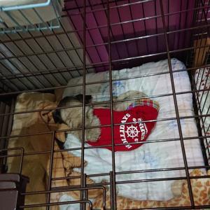 愛犬の介護グッズ考察